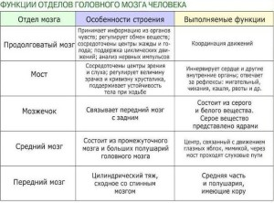 Функции отделов головного мозга