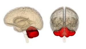 мозжечок