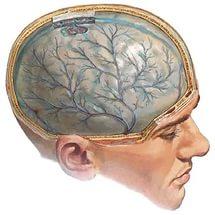 признаки посттравматической энцефалопатии