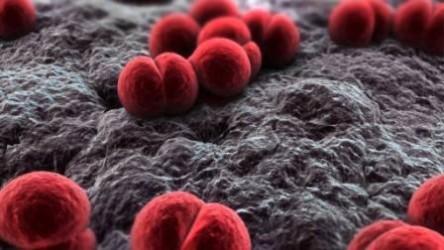 Как развивается менингококковый менингит