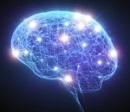 Строение головнго мозга