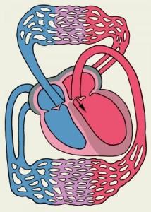 ассиметрия боковых желудочков головного мозга