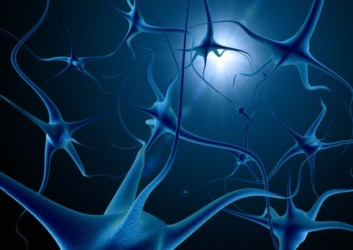 нейропластичность мозга