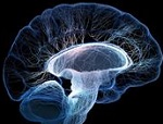 БАДы для мозгового кровообращения