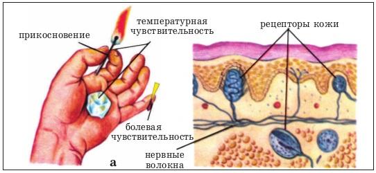 Гемигипестезия