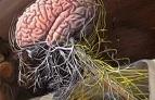 Инфекционные поражения нервной системы