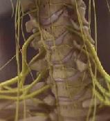 Миелопатия спинного мозга