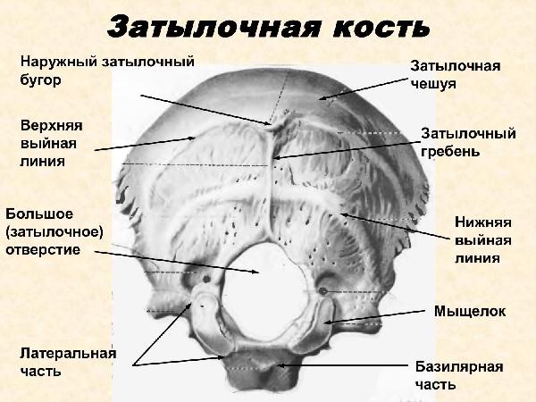 Перелом затылочной кости черепа