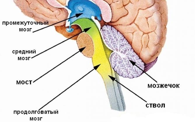 Дисфункция стволовых структур