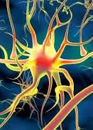 Отмирание клеток головного мозга
