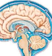 Умеренная наружная гидроцефалия