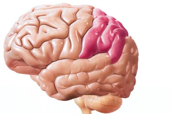 Теменная доля головного мозга